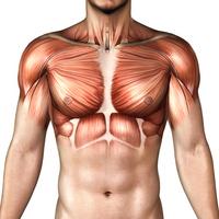 Body image [1030979] Human