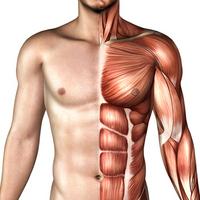 Body image [1031069] Human