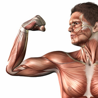 Body image [1031269] Human