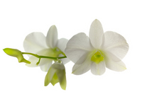 Orchid Stock photo [1037106] Orchid