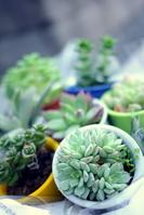 Small succulent us Stock photo [1037605] Succulent