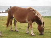 Horse Stock photo [1037653] Aomori