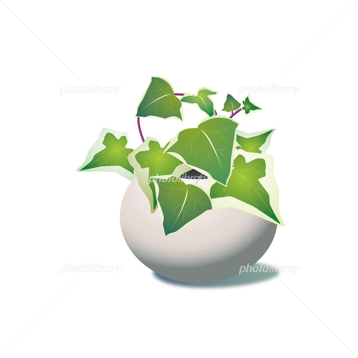 観葉植物のイラスト イラスト素材 1140585 フォトライブラリー