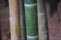 Bamboo Stock photo [1139214] Bamboo