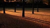 Park that plugs the morning sun Stock photo [1139358] Asahi