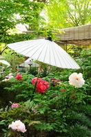 Peony bloom garden Stock photo [1139456] Japanese