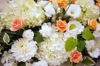 White flowers and orange miniature rose Stock photo [1140706] Hydrangea