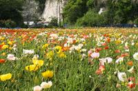 Flower garden of Boso Stock photo [1145244] The