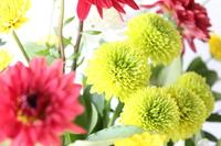 Chrysanthemum Stock photo [1146628] Chrysanthemum