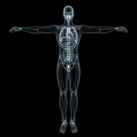 Human body [1248057] Skeleton