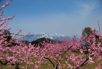 Yatsugatake and Momohatake Stock photo [1248543] Peach