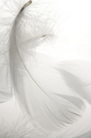 Feather Stock photo [1335977] Object