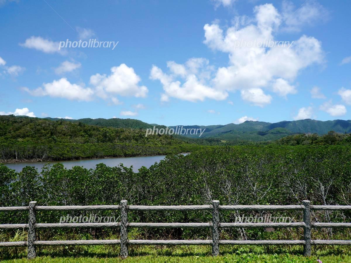Island of Okinawa Iriomote mangrove Photo