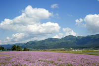 Astragalus groves and Aso somma Stock photo [1420307] Japan
