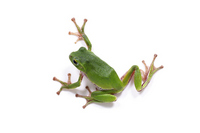 Frog Stock photo [1421621] Green