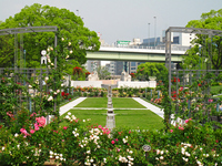 Osaka Nakanoshima rose garden Stock photo [1424540] Nakanoshima