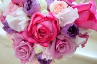 Shocking pink rose and purple Stock photo [1424663] Rose