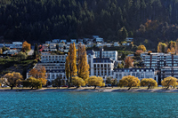 Yellow leaves of the lake as seen from New Zealand Lake Wakatipu Stock photo [1426716] New