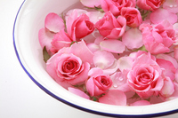 Rose flower and basin Stock photo [1430544] Rose