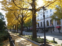 Yamashita Koen-dori Stock photo [1522090] Autumn