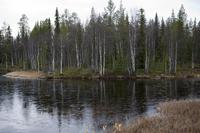 Autumn of Lapland Stock photo [1523363] Lapland