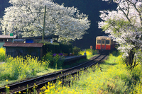 Spring Itabu Stock photo [1527004] Kominato