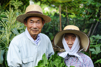 Agriculture Stock photo [1527908] Farmer