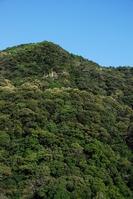 Laurel forest of Aya Stock photo [1528527] Aya