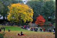 Autumn of Central Park Stock photo [1529236] Autumn
