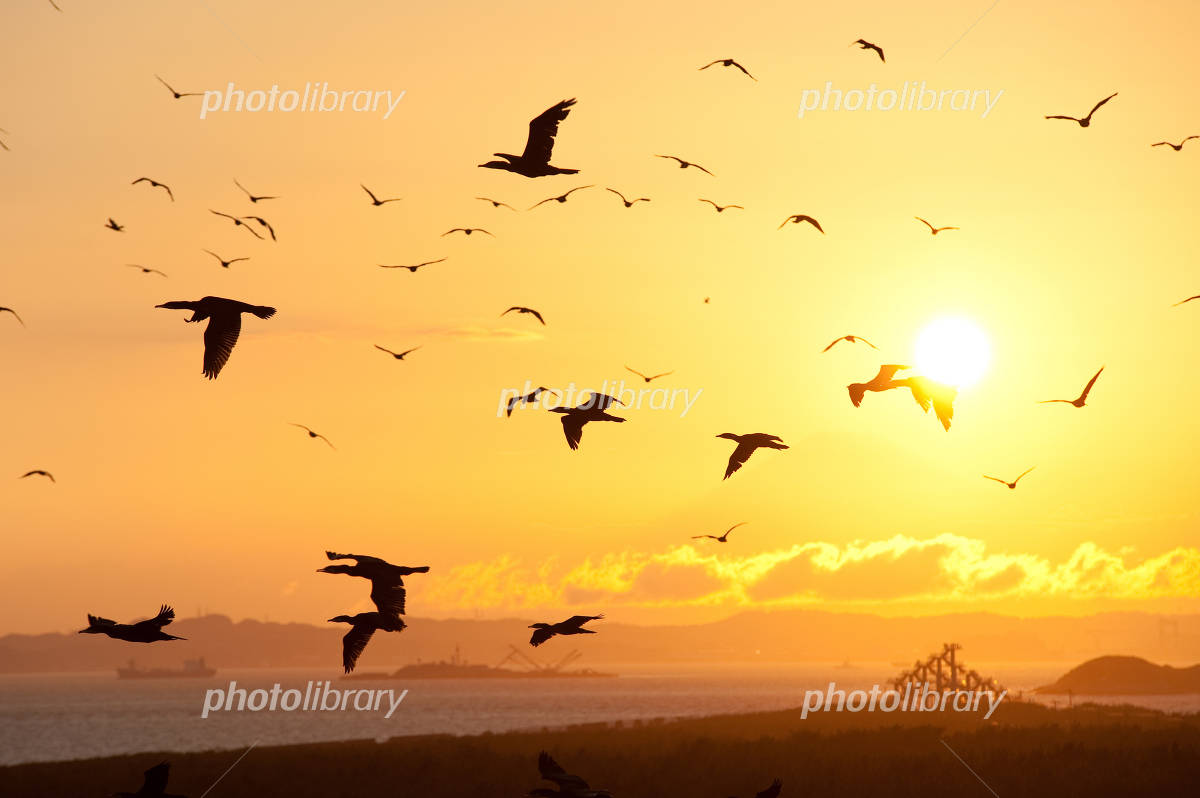 鳥の舞う夕焼けの写真