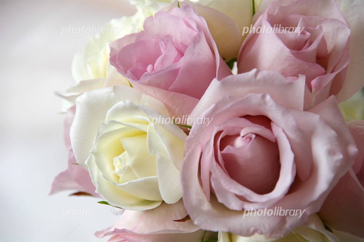 Bouquet of lovely pale pink roses Photo