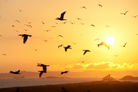 Sunset dancing bird Stock photo [1623093] Migratory