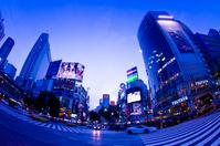 Shibuya night view Stock photo [1632833] Shibuya-ku
