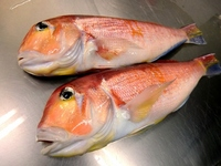 Sweet red snapper Stock photo [1633090] Sweet