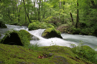 Early summer of Oirase Stream Stock photo [1635306] Oirase