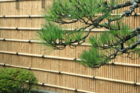 Branches of pine and bamboo fence Stock photo [1636616] Bamboo
