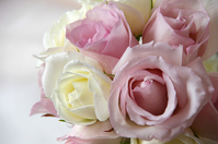 Bouquet of lovely pale pink roses Stock photo [1637091] Bouquet