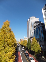 Ginkgo that turns red and yellow of Hiroo Stock photo [1725807] Autumn