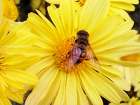 Honey bees Stock photo [1729315] Honey