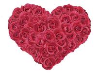 Rose [1736910] Rose
