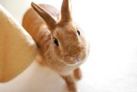 Rabbit Stock photo [51712] Rabbit