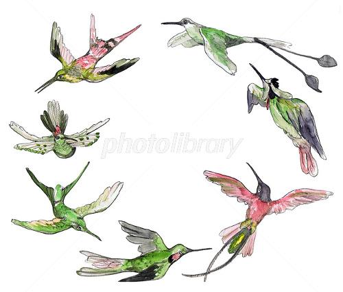 日本にもいる!!絶滅危惧種の鳥類たち!   生き物 …