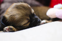 Rest of puppy Stock photo [1801191] Dogs