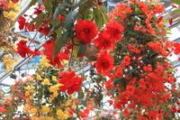 Begonia Stock photo [1808540] Begonia