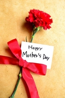 Message card of red carnations and Mother's Day Stock photo [1910561] Mother's