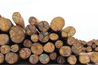 Lumber yard field Stock photo [1911337] Wood