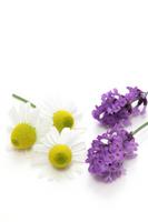 Chamomile and lavender Stock photo [2021435] Chamomile