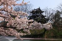 Sakura and Takada castle Stock photo [2023005] Takada