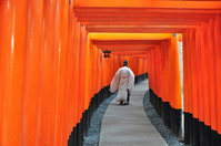 Thousand Torii of Fushimi Inari Taisha stock photo