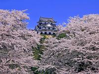 Hikone Castle Stock photo [2126252] Hikone